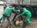 В центре Одессы высадили 685 деревьев и 716 кустов
