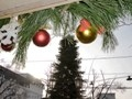 Pre-New Year Odessa: installation of Christmas tree on the main street of the city