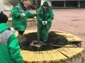 Еще 100 деревьев и кустов высадили озеленители Одессы