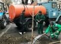 Одесский Горзелентрест реанимировал молодые деревья на Французском бульваре