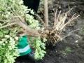 Сюрпризы погоды: в Одессе продолжают высаживать деревья