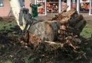 Одесский Горзелентрест за неделю высадил 37 кленов и 25 сосен