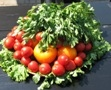"The festival ""Day of the tomato"" to be in Odessa"
