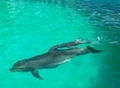 Recruitment in Odessa dolphinarium. Photo of a dolphin. Video