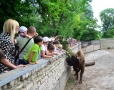 The Day of Bison was held in Odessa zoo