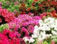 Фестиваль «Летний день в саду» приглашает одесситов и гостей города