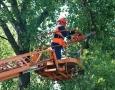 В Одессе завтра проведут обрезку деревьев, разрушающих фасады