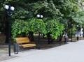 Одесские парки продолжают преображаться и благоустраиваться. Фоторепортаж
