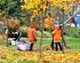 Около двух тысяч человек приняли участие в осенней уборке одесских парков. Фоторепортаж