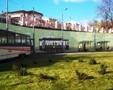 Одесский Горзелентрест продолжает работы по посадке деревьев