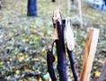 Взамен уничтоженных вандалами деревьев в одесском Лунном парке озеленители высадят новые