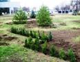 На площади Деревянко высадили 2270 кустов роз, 656 кустарников и 70 деревьев