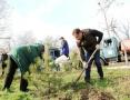 100 сосен высадили в Одессе на Трассе здоровья. Фоторепортаж