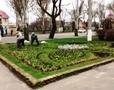 7 тысяч цветов-весенников и 97 деревьев высадили в Суворовском районе Одессы