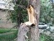По обращениям одесситов регулярно проводится обрезка сухих и аварийных деревьев