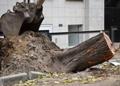 Одесский Горзелентрест после стихии выполняет масштабные работы по корчевке пней и сносу пострадавших крупных деревьев