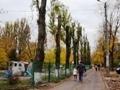 В Одессе начались работы по понижению кроны высоких тополей