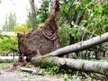 В Одессе регулярно проводится обрезка сухих и аварийных деревьев по обращениям граждан