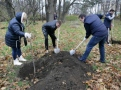 Мэр Одессы и депутаты высадили деревья в парке Победы