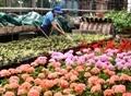 Итоги-2016: одесский «Горзелентрест» высадил 1792 дерева, 643 куста и 13 315 кустов роз