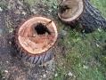 В Одессе регулярно ведется обрезка сухих и аварийных деревьев