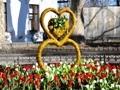 800 цветов белых и красных тюльпанов украсили первую весеннюю клумбу Одессы. Фото