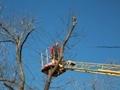 На Трассе здоровья ведутся работы по санитарной обрезке деревьев
