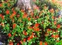 Приморский бульвар Одессы украсят более 3500 цветов