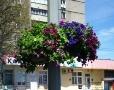 Более 500 цветочных подвесных чаш украсят Одессу этим летом