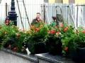 На Потемкинской лестнице впервые будут установлены вазы с цветами. Фото