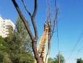 В Одессе проводят обрезку деревьев по обращениям граждан на горячую линию 15-35