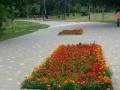 Горзелентрест продолжает работы по благоустройству зеленых зон Одессы