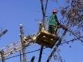 В связи с работами по обрезке деревьев 24 июля будет затруднено движение транспорта по ул. Канатной
