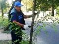 Озеленители Горзелентреста продолжают работы по текущему содержанию зеленых зон города